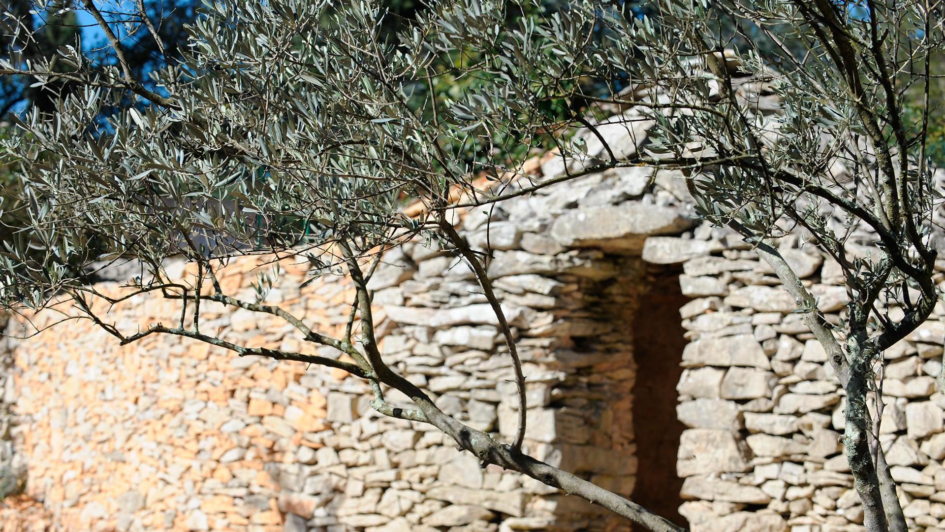 Jardin avec piscine chauffée dans le Gard  Nimes